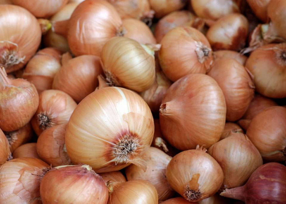 Fully funded courses from the people who 'know their onions'